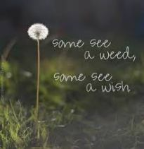 wish or weed